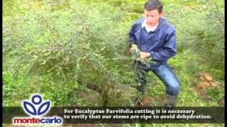 Montecarlo Gardens - Video 1