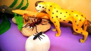 Мультик про животных. Леопард и муравей. Игрушки видео.