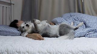 주인을 너무 사랑하는 강아지의 행동