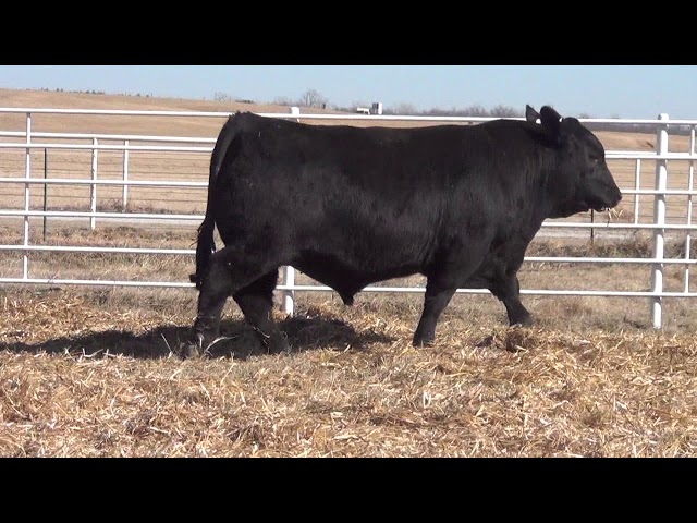 Express Ranches Lot 102