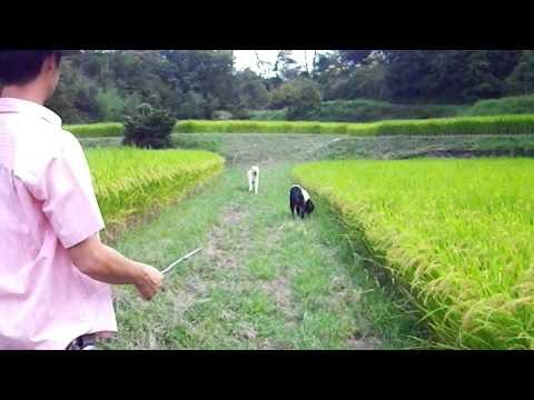 里山de散歩・Ⅰ  2011.9.18