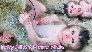 Wow Newborn Baby Alita Laying On The Cement So Cute  And Healthy / PTM 1803