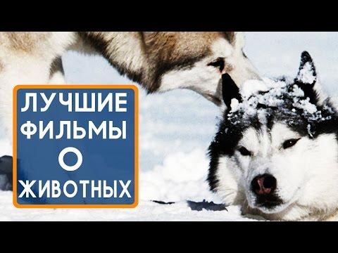 Художественные фильмы про животных / Feature films about animals