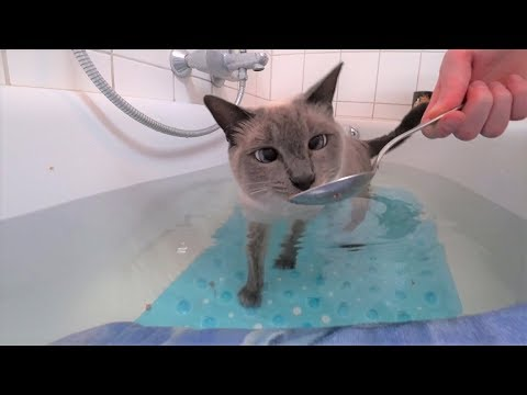 Tutorial: How to get a Cat used to Water/a Bath (no Stress/Forcing) Part 2: Half in Water (Bathtub)