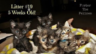 Hand feeding stubborn kittens at 5 weeks! Updates: This is from Jul...