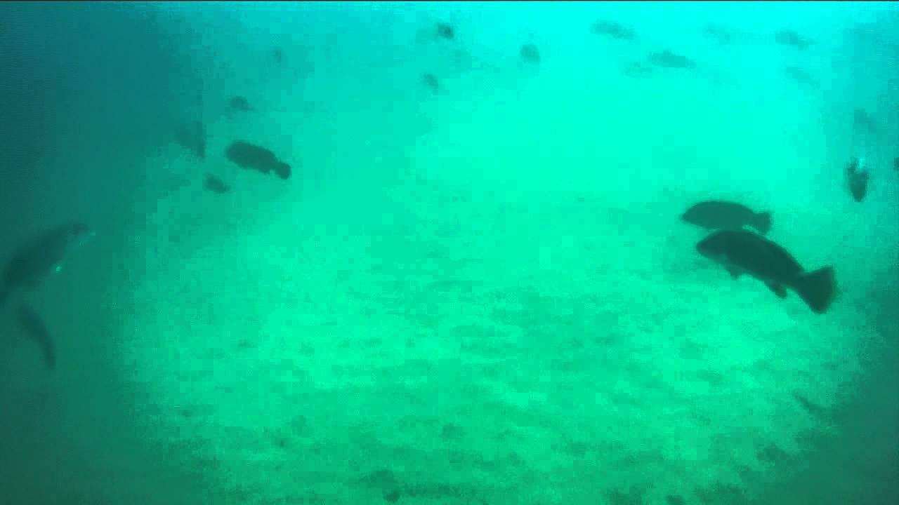 Lake Michigan Fish 75 Gopro Hero Hd Underwater Youtube