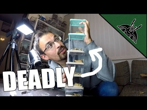 MY NEW DEADLY ANIMALS - Unboxing