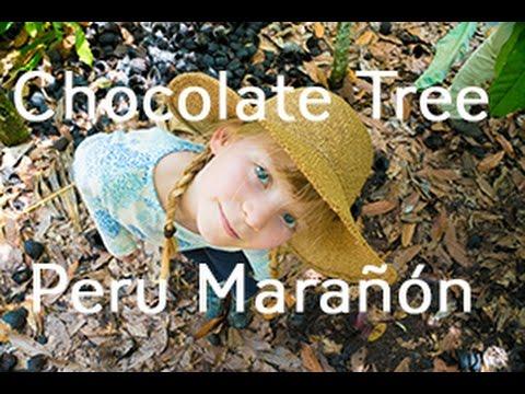 Chocolate Tree in Peru: Marañón Canyon