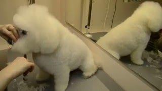 видео стрижка собак недорого