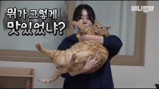 다-맛있었구나-ㅣ-g-o-a-t-super-fat-cat-is-here