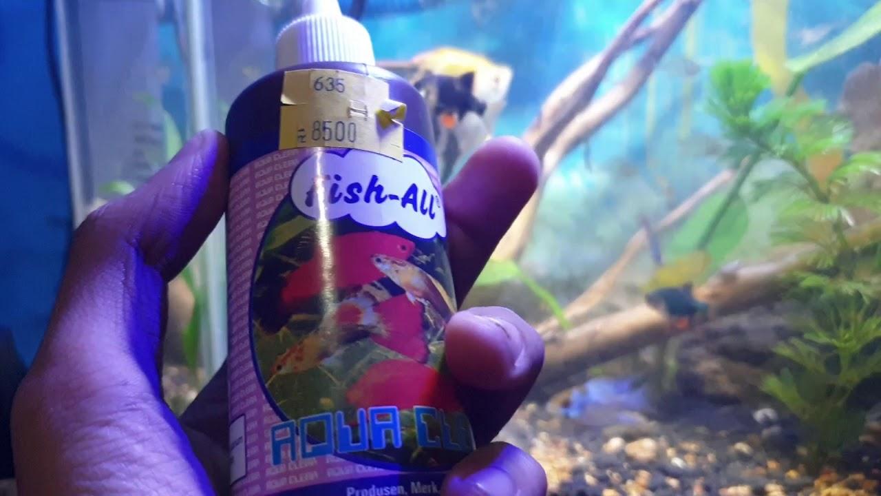 cara ampuh menjernihkan air aquarium/aquascape dengan ...