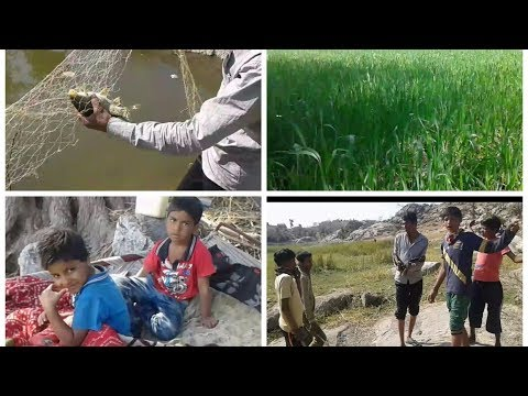 Village Fishing in India - Depth of Nature - Amazing Fun
