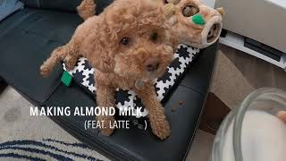 How to make almond milk with L…