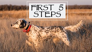 First Steps With a New Dog  Pro Training