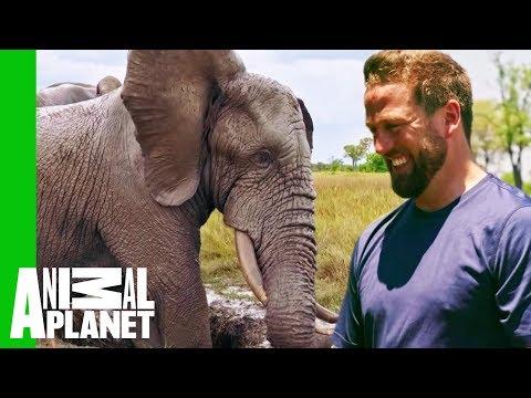 Jabu The Elephant Gets A Life-Changing Leg Brace   Extended Cut   Dodo Heroes