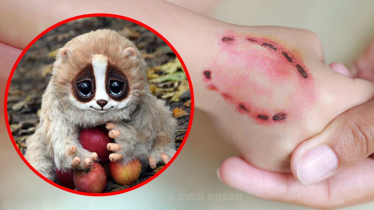 10 Cute Animals That Are Actually Deadly