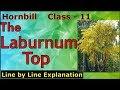The Laburnum Top - LINE BY LINE EXPLANATION   Class 11 - Hornbill