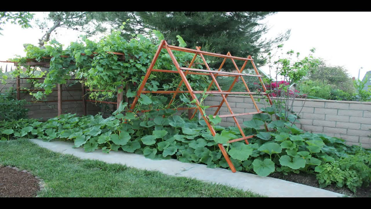 vegetable garden time lapse youtube. Black Bedroom Furniture Sets. Home Design Ideas