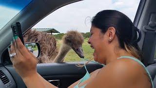 예기치 않은 동물 공격 🦢🐢🦓 재미있는 동물 조업 인간