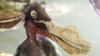 Un petit ptérosaure apprend à voler (anhanguera) - ZAPPING SAUVAGE