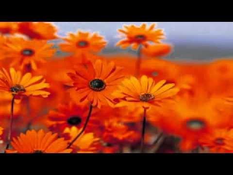 zikir tenang dan suci hati (1)-Hijjaz - Zikir Lazim - YouTube.FLV