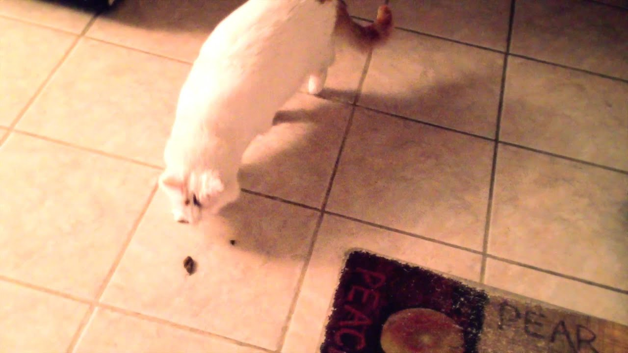 non-prescription low phosphorus cat food