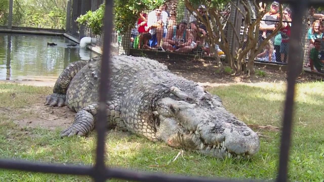 Utan Alligator Adventure N Myrtle Beach Sc 2011 Youtube
