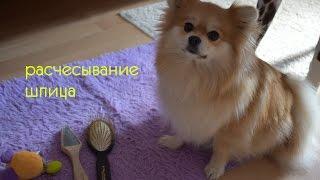 О РАСЧЕСЫВАНИИ ШПИЦА/КУПИЛА ДОРОГИЕ РАСЧЕСКИ/