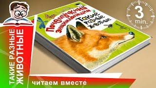 Почемучкина Энциклопедия. Такие Разные Животные. Аванта. Обзоры книг для детей.