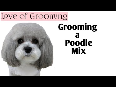 Grooming a Poodle Mix | Time Lapsed Dog Grooming