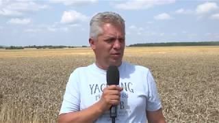 Жътва на пшеница при Георги Георгиев - общ Харманли
