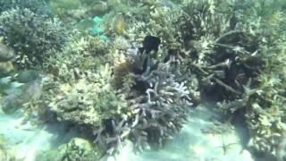 Подводный мир Индонезии, остров Флорес
