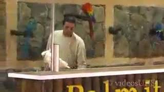 Parrot show awesome birds with awesome stunts