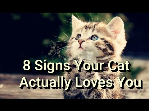8 Signs Your Cat Actually Loves You