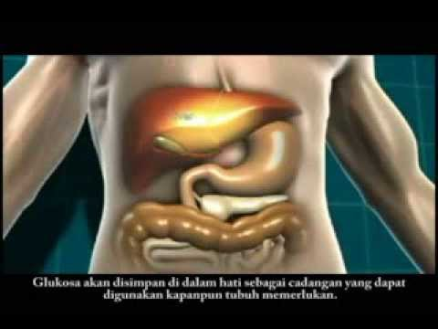 Animasi Mengenai Diabetes Melitus