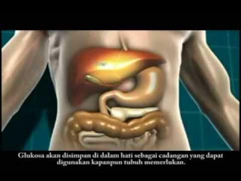 Animasi Mengenai Diabetes Melitus