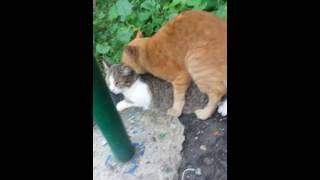 Страсти между кошкой и котом