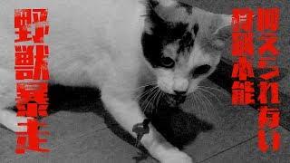 カギを盗んで野獣化した猫と真夜中の攻防戦