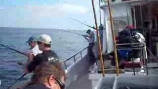 albacore fishing-tide change