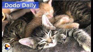 Feral Cat Becomes Grandpa To Kittens | The Dodo Daily thumbnail