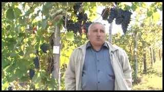«Сельский порядок». Сад интенсивного типа (24.09.2014)