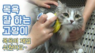 냥빨목욕 잘하는 고양이!! 이렇게 얌전할 수가?! 귀여…
