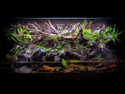 The ULTIMATE FireBellied Toad Paludarium