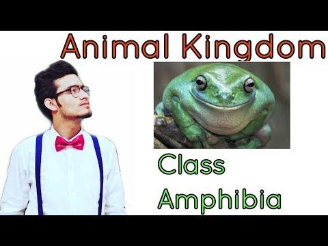 Animal Kingdom: Class Amphibia In Detail