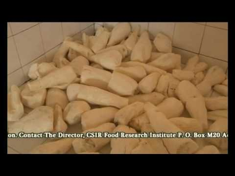 CSIR Food Research Institute Ghana Part 2