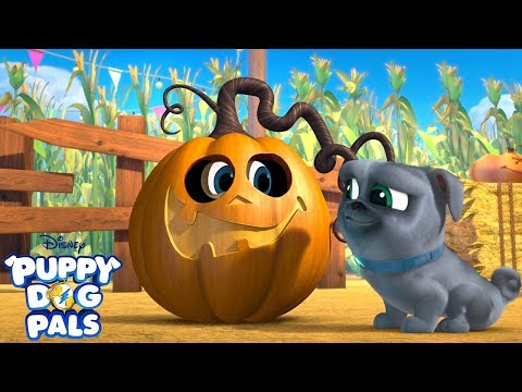 At The Pumpkin Patch   Music Video   Puppy Dog Pals   Disney Junior
