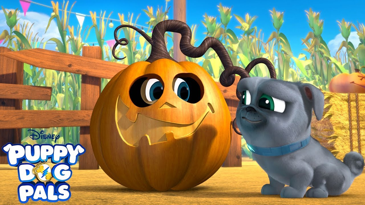 Bingo And Rolly At The Pumpkin Patch Music Video Puppy Dog Pals Disney Junior Youtube