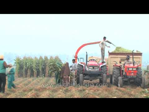 Forage harvester : Advanced mechanised method of harvesting crops in India