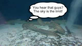 Leopard Shark Breeding Program HD Youtube 3 Thumbnail