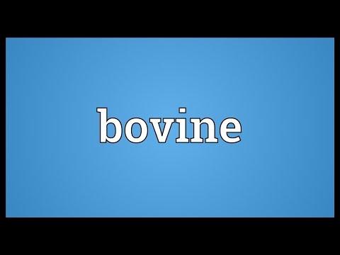 Bovine Meaning